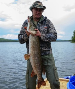 This picture made available on July 26, 2013 shows Russian President Vladimir Putin holding a huge pike fish, after he caught it in the Tyva region on July 20, 2013 during his vacation.   AFP PHOTO/ RIA-NOVOSTI/ ALEXEY DRUZHININ